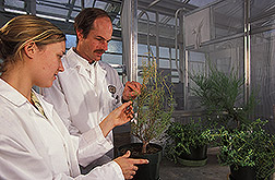 Technician and entomologist assess results of experiment: Click here for full photo caption.