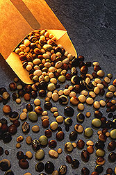 A variety of soybean seeds spill from an envelope. Link to photo information