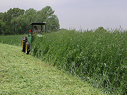 ARS technician flail-mows a rye and vetch cover crop: Click here for full photo caption.