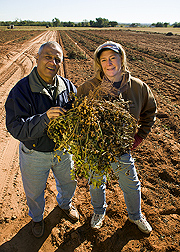 Hassan Melouk and Kelly Chenault display a Sclerotinia-resistant peanut plant--uprooted and loaded with healthy peanuts. Link to photo information