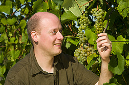 Geneticist examines grapes for ripeness: Click here for full photo caption.