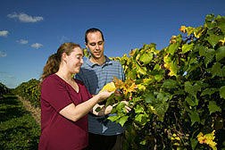 Geneticist and plant pathologist examine differences in growth and development in two plants in the USDA Cold Hardy Grape Collection: Click here for full photo caption.