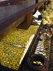 Grapefruit peels and pulp at a citrus-processing plant. Link to photo information
