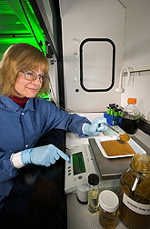 Biologist prepares a sample of trap grease for conversion to biodiesel: Click here for full photo caption.