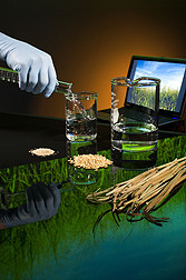 Gloved hand pours ethanol into lab flask; display of switchgrass stems and barley seed. Link to photo information