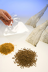 Clockwise from upper left: a sheet of gelatin made from Alaskan pollock fish skin, pollock fish skins used for gelatin extraction, shrimp feed pellets made with dried salmon hydrolysate, and salmon hydrolysate powder: Click here for photo caption.