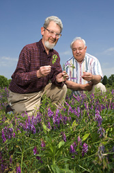 Geneticist (left) and technician examine flowering and seed development in hairy vetch plants: Click here for full photo caption.