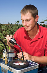 Technician measures leaf water potential to determine water stress status of cotton plants: Click here for full photo caption.