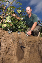 Agricultural engineer demonstrates the soil-wetting pattern of subsurface drip irrigation in a cottonfield and measurement of volumetric soil water content using time-domain reflectometry probes: Click here for full photo caption.