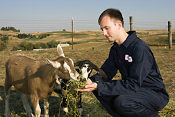 Photo: Researcher examines two goats. Link to photo information