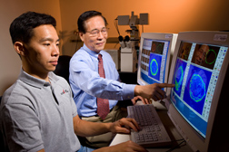 Photo: Two researchers are analyzing images of proteins on computer screens. Link to photo information