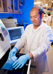 To prepare for a study of the anti-inflammatory effect of phytochemicals, molecular biologist performs a polymerase chain reaction test: Click here for full photo caption.