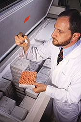 Physiologist sorts vials of plasma and serum stored at -80°C that will be used for lipid analyses: Click here for full photo caption.