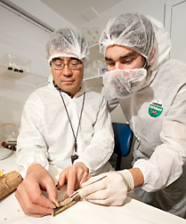 Entomologist (left) and technician dissect EAB-infested ash logs to confirm that the borers have been parasitized by Tetrastichus planipennisi, a wasp from China: Click here for full photo caption.