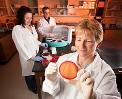 Technician Dee Kucera (foreground) harvests E. coli O157:H7 isolates from agar plates as technician Shannon Ostdiek (left) plates samples for E. coli O157:H7 isolation and microbiologist Jim Wells uses a robot to enrich E. coli O157:H7 from samples: Click here for photo caption.