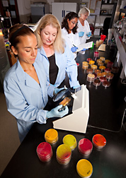 Left to right: Visiting Spanish veterinarian scientist and physiologist examine Petri dishes for pathogens like Campylobacter, Salmonella, and E. coli, while postdoctoral fellow and University of Arkansas microbiologist prepare plates to study the efficacy of natural compounds against pathogenic gastrointestinal bacteria from poultry: Click here for full photo caption.
