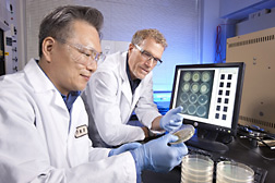 Photo: ARS research leader Bruce Campbell (right) and molecular biologist Jong H. Kim inspect petri dish assays of antifungal agents. Link to photo information