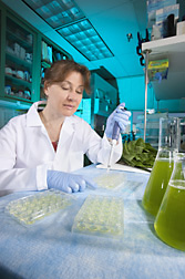 Research associate prepares lettuce juice samples for a fluorescence assay used to measure oxidative compounds: Click here for full photo caption.