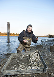 ARS molecular biologist inspects oysters grown for research: Click here for full photo caption.