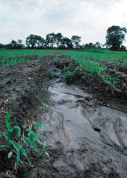 Ephemeral gullies like this one in a central Iowa field often cause much erosion on farms: Click here for full photo caption.