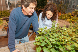 Plant pathologist Stewart Gray and molecular biologist Michelle Cilia examine greenhouse plants for virus symptoms: Click here for photo caption.