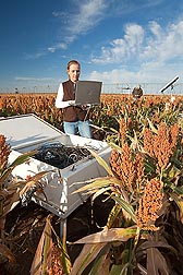 In a sorghum field, ARS technician Jourdan Bell (left) collects soil water content data from TDR (time-domain reflectometry) probes that measure crop water use. In the background, soil scientist Robert Schwartz observes grain fill in plants grown under deficit irrigation: Click here for photo caption.