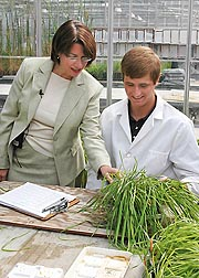 At the Cereal Disease Laboratory in St. Paul, Minnesota, plant pathologist Matt Rouse (right) displays varying levels of stem rust infection to U.S. Senator Amy Klobuchar: Click here for photo caption.
