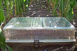 A covered gas flux chamber from a study done in a field of maize during two growing seasons: Click here for full photo caption.