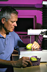 Horticulturist uses a texture analyzer to measure the firmness of a d'Anjou pear.