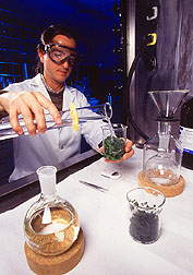 Extracting artemisinin from wormwood.