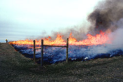 Controlled burning to remove plant residue.