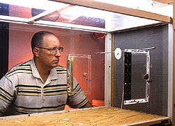 Entomologist observes sap beetles flying upwind in a wind tunnel. Click here for full photo caption.