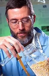 Technician Thomas Morgan aspirates maize weevils into a glass vial. Link to photo information.