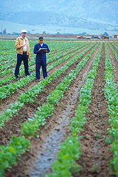 Geneticist and technician evaluate sugar beet breeding lines for disease resistance. Link to photo information.