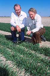 Agronomist and chemist inspect a new winter malting barley: Click here for full photo caption.