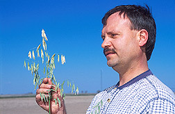 Geneticist examines a new hull-less oat: Click here for full photo caption.