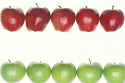 Photo: Apples. Link to photo information