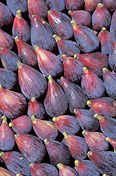 Photo: Black Mission figs, one of the most important fig varieties, are shown here. Link to photo information