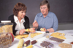 Photo: Geneticist Linda Pollak (left) and plant biologist Susan Duvick inspect seed characteristics of corn that has genes from gamagrass. Link to photo information