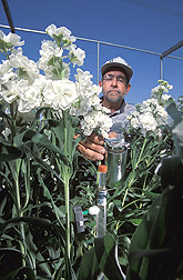 Soil scientist measures plant and water status of flower plants. Link to photo information