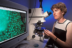 Postdoctoral fellow observes Arabidopsis pollen with a microscope: Click here for full photo caption.