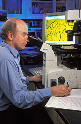 Peering through a microscope, zoologist examines effects of an inhibitor of sterol metabolism on a nematode. Link to photo information