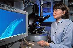 Plant pathologist examines the head and neck of a nematode: Click here for full photo caption.