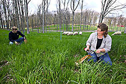 Two technicians clip forage samples: Click here for full photo caption.