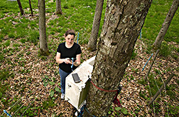 Technician collects data from instruments that record soil temperature and moisture: Click here for full photo caption.