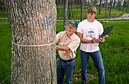 Agronomist and technician measure tree circumference: Click here for full photo caption.