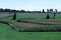 Alternating strips of alfalfa and corn on a southern Wisconsin farm: Click here for full photo caption.