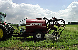 Swine manure is sprayed on growing alfalfa: Click here for full photo caption.