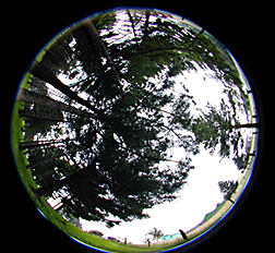 180-degree photoimage of the vegetation and sky over a silvipasture. Link to photo information