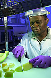 Chemist Olusola Lamikanra slices a cantaloupe. Link to photo information